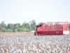 cosechadora de algodon - JAVIYU