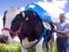 vaca-inta