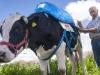 vaca-inta3