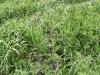 cultivo-cobertura-2