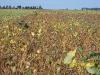 eea-oliveros-7-8-de-marzo-de-2006-002