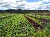 dsc_3172_horticultura-a-campo_0