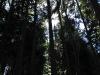 dsc_3791_forestla-pinos_0