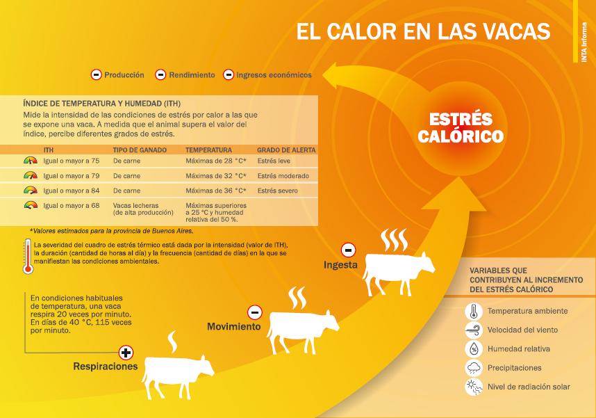 El efecto del calor en las vacas