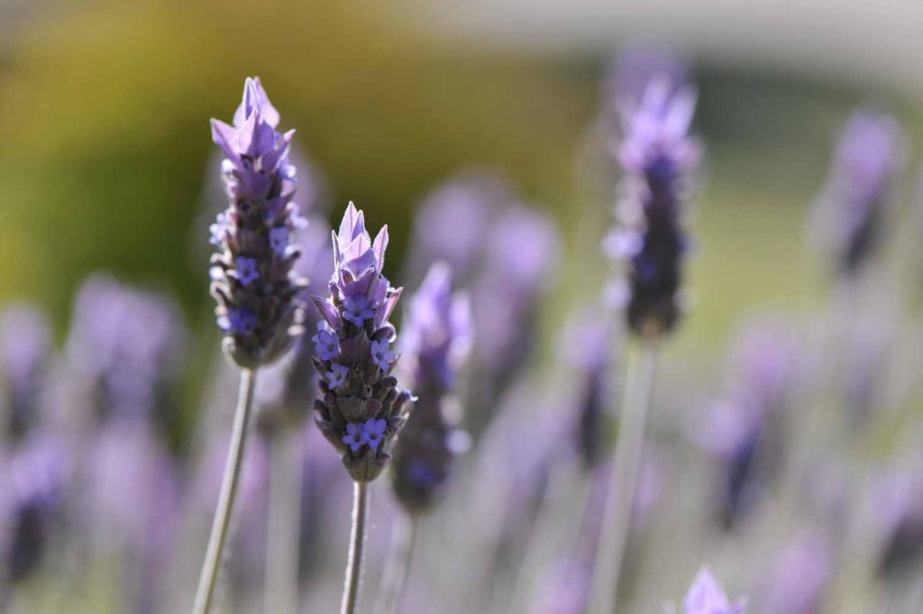 Flores, aromáticas y medicinales