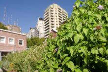 INTA_Informa_Agricultura_urbana (12)