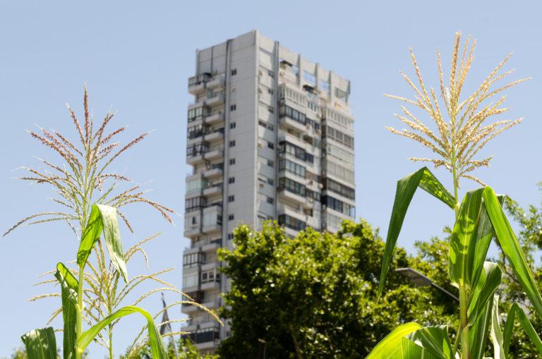 INTA_Informa_Agricultura_urbana (14)