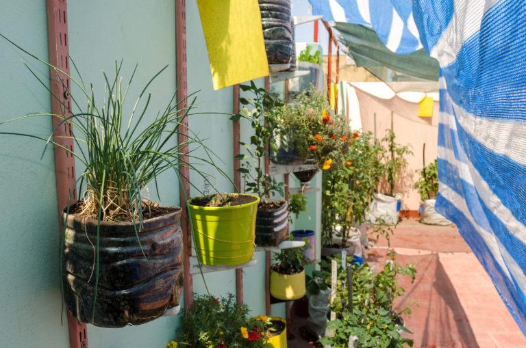 INTA_Informa_Agricultura_urbana (15)