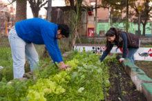 INTA_Informa_Agricultura_urbana
