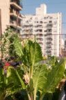 INTA_Informa_Agricultura_urbana (3)