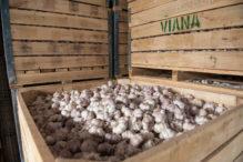 INTA_Informa_Agroindustria (17)