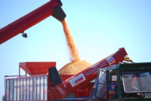INTA_Informa_Agroindustria (18)