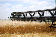 INTA_Informa_Agroindustria (26)