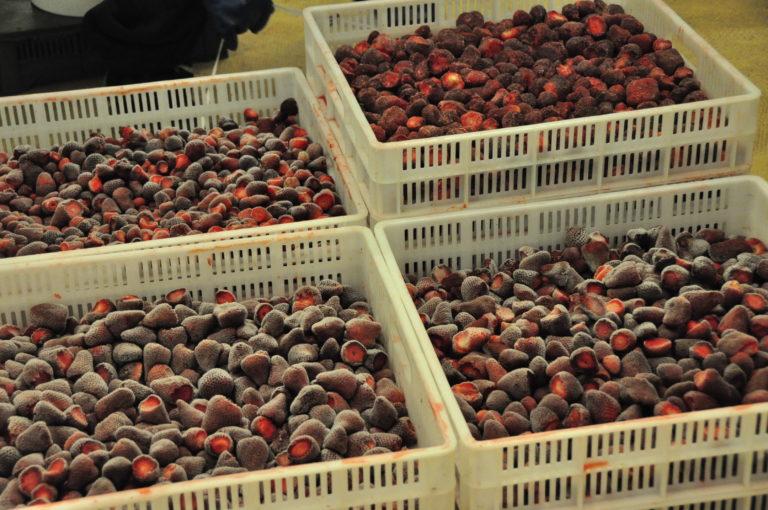 INTA_Informa_Agroindustria (5)