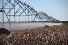 INTA_Informa_Agroindustria (7)