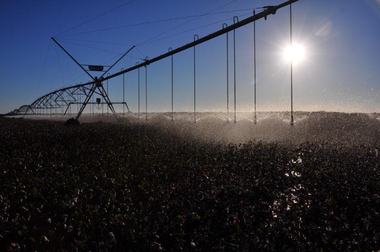INTA_Informa_Agroindustria (8)