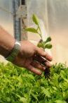 INTA_Informa_Ecofisiologia (2)