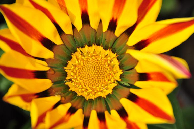INTA_Informa_Flores_aromaticas_medicinales (6)
