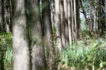 INTA_Informa_Forestales (10)