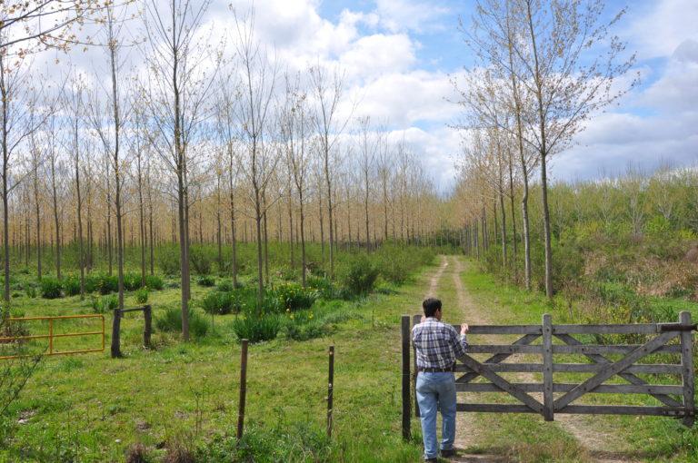 INTA_Informa_Forestales (13)