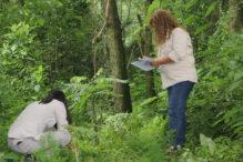 INTA_Informa_Forestales (8)