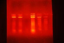 INTA_Informa_Genetica (7)