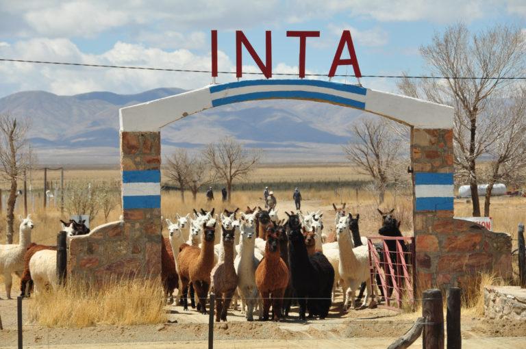 INTA_Informa_Institucional (14)