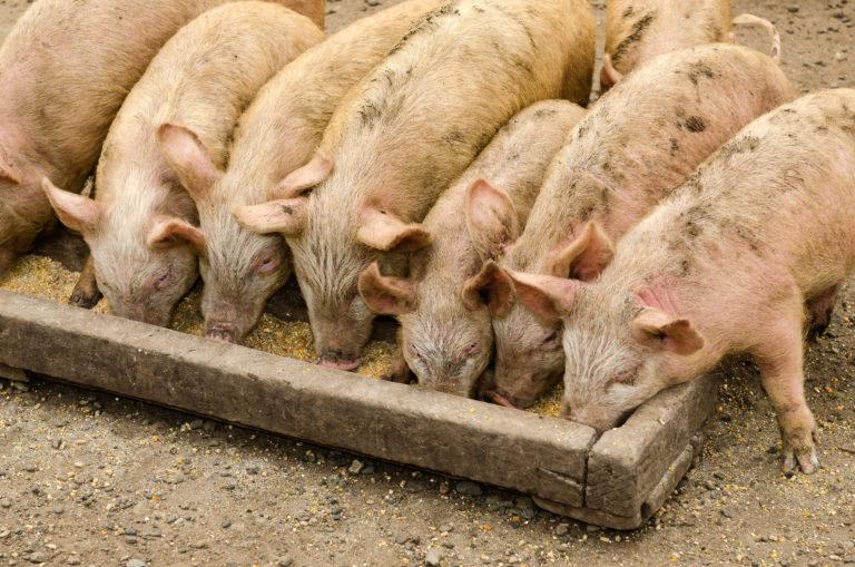INTA_Informa_Nutricion_animal (18)