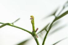 INTA_Informa_Proteccion_vegetal (27)