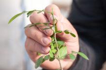 INTA_Informa_Proteccion_vegetal (28)