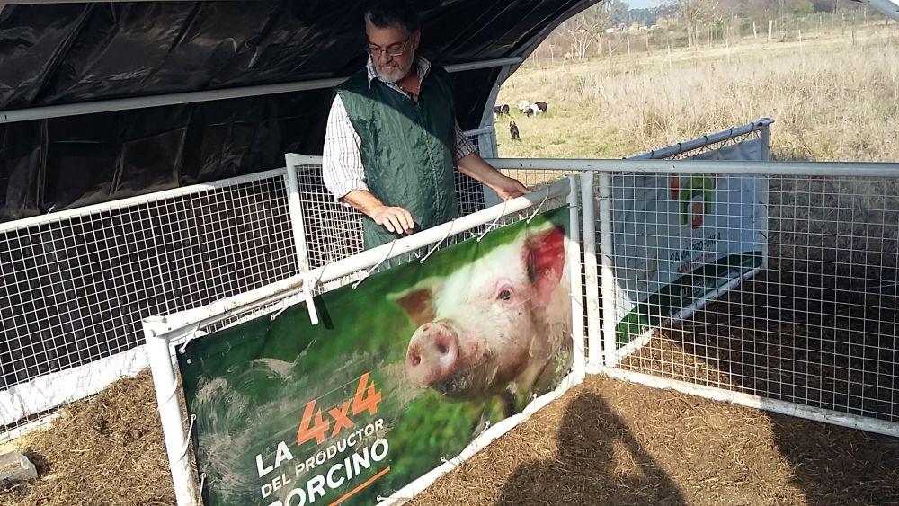 Cerdo criollo costero: una raza autóctona