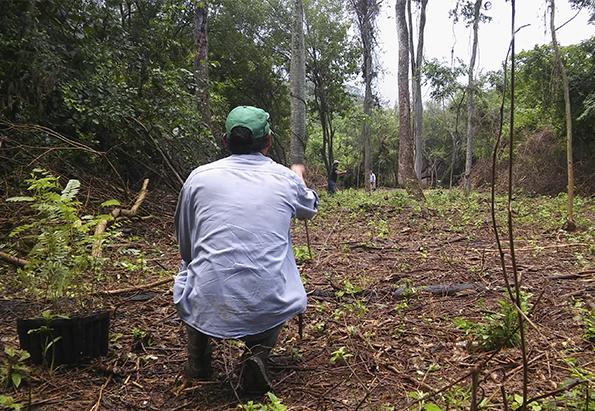 Jujuy: restauran la selva pedemontana de la Yunga