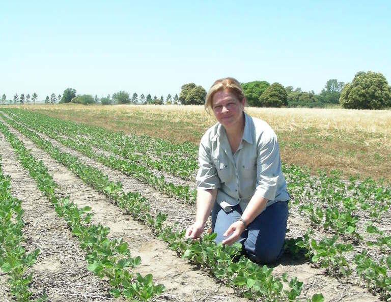 Estrategia para multiplicar un 75 % el rendimiento del maíz
