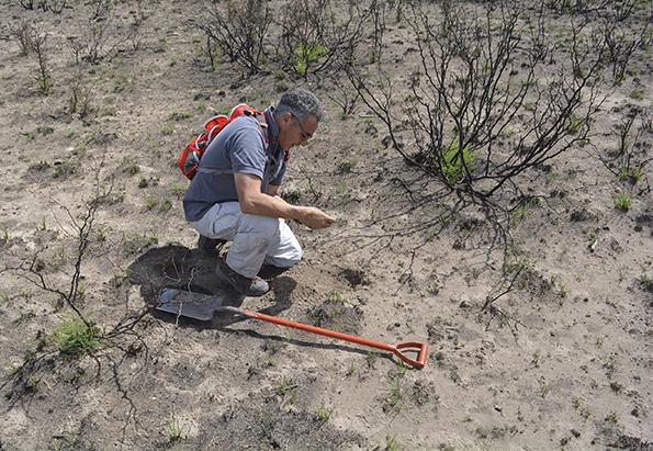 Casi 3 millones de hectáreas con riesgo de incendio