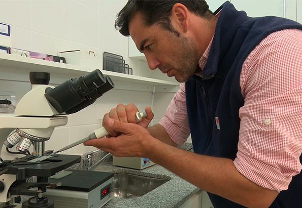 Patagonia: producción de embriones in vitro