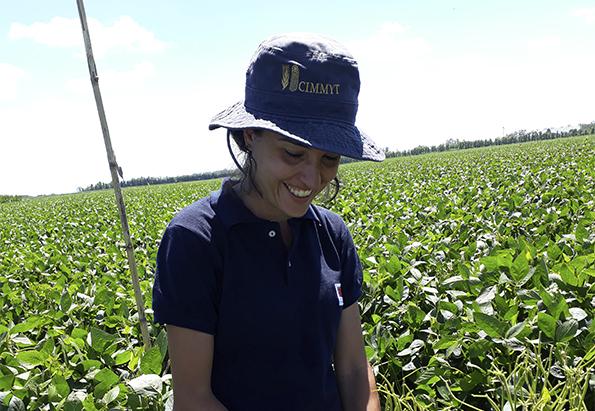Estudian cómo impacta la radiación solar en la soja