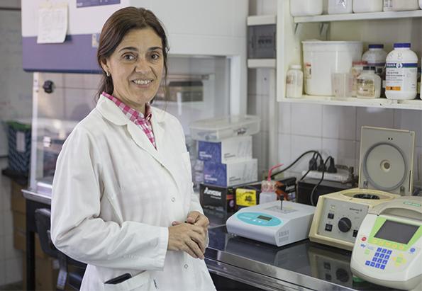 Leucosis bovina: avanzan en un plan de vacunación