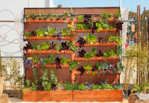 Huertas verticales: alternativa para seguir de siembra