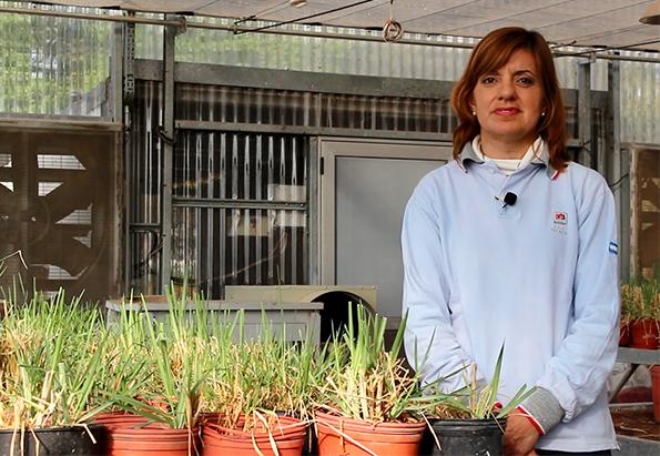 El desafío de las industrias semilleras