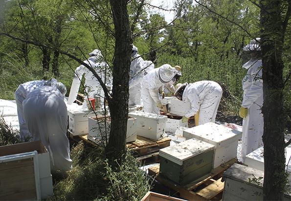 Red de apicultoras apuesta por la igualdad de género