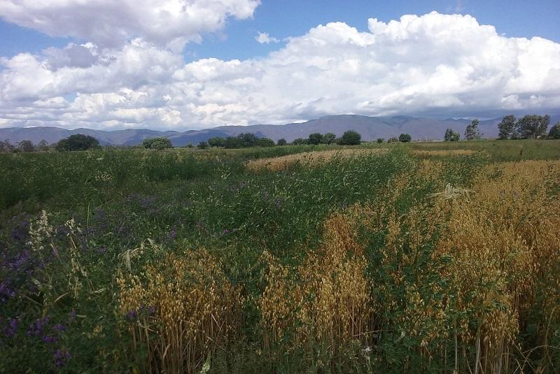 El INTA promueve el mejoramiento de suelos degradados