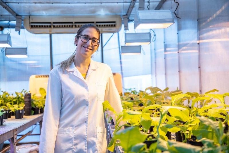 Estudian cómo los virus infectan a las plantas