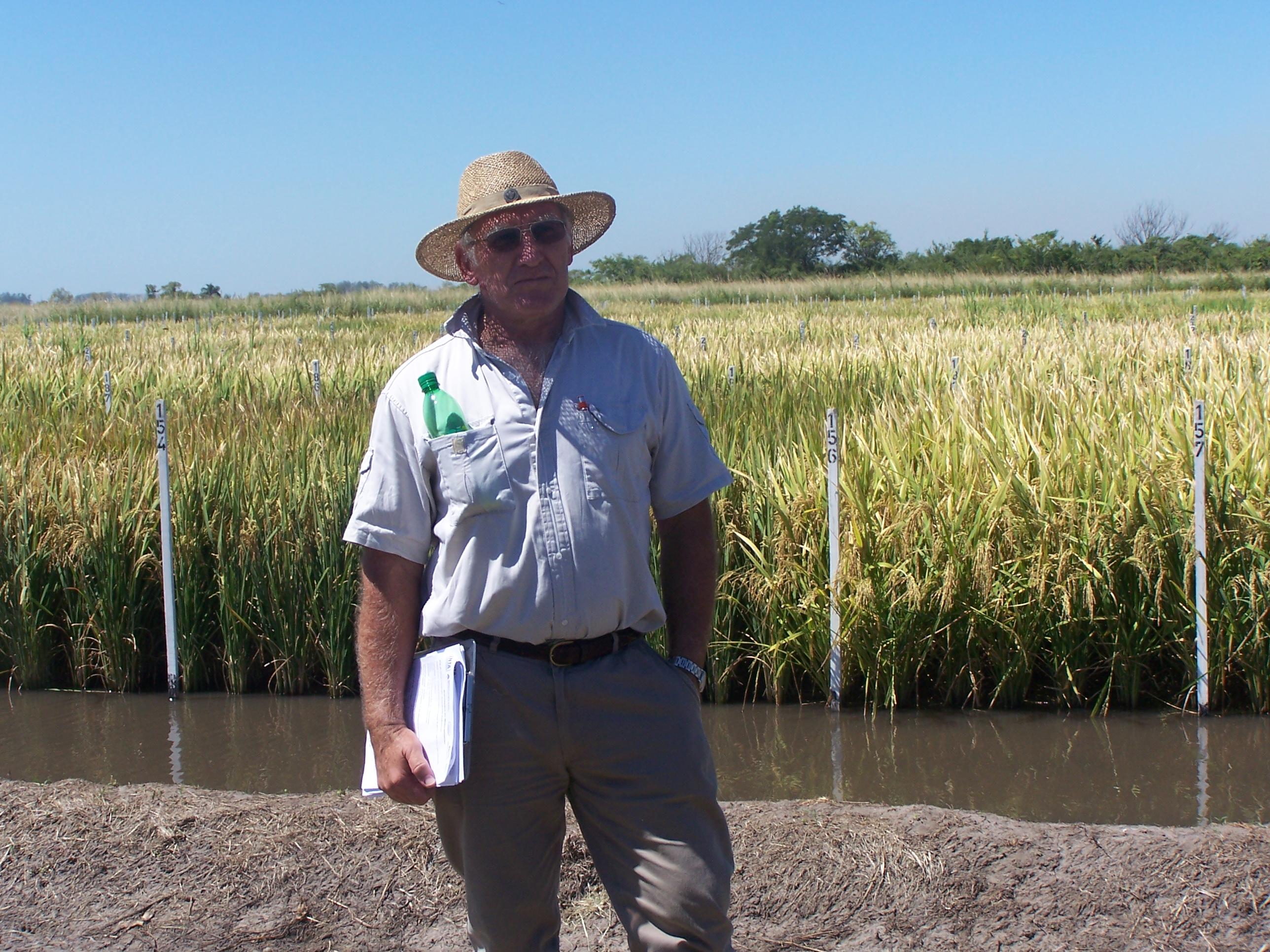 El arroz también sufrirá la bajante del Paraná
