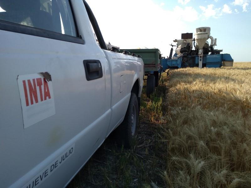 El zinc y los microorganismos mejoran el rendimiento del trigo 1