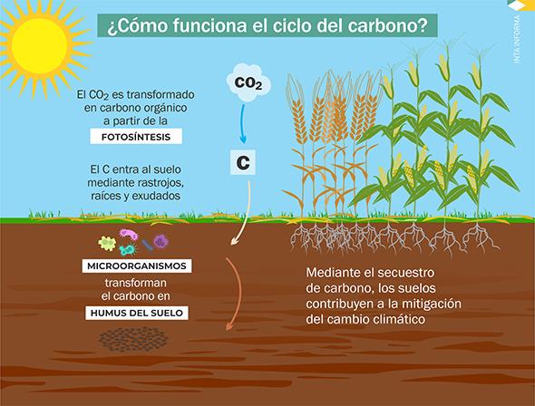 Carbono: el elemento que determina la sustentabilidad del agro